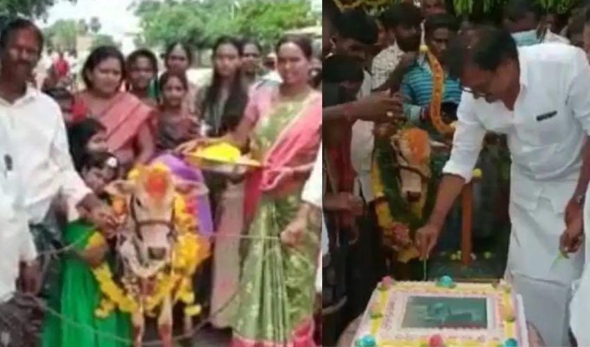 https://10tv.in/latest/farmer-celebrates-calf-birthday-function-in-kadapa-district-282132.html