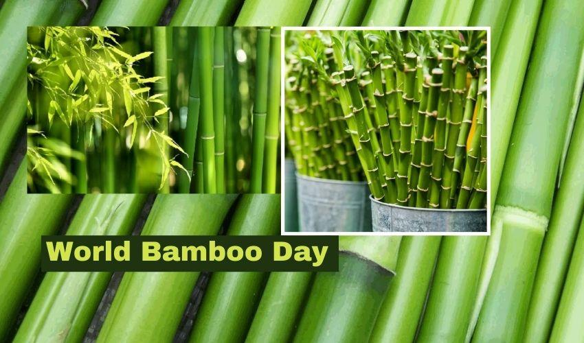 World Bamboo Day 2021 : భారత్ లో ఎదురు లేని 'వెదురు'..చైనా తర్వాత మనమే