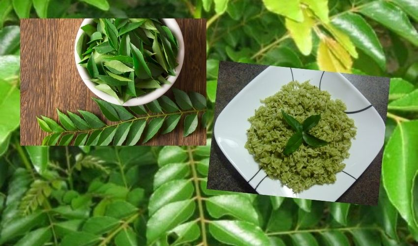 https://10tv.in/latest/curry-leaves-may-help-to-manage-cholesterol-in-your-body-280331.html