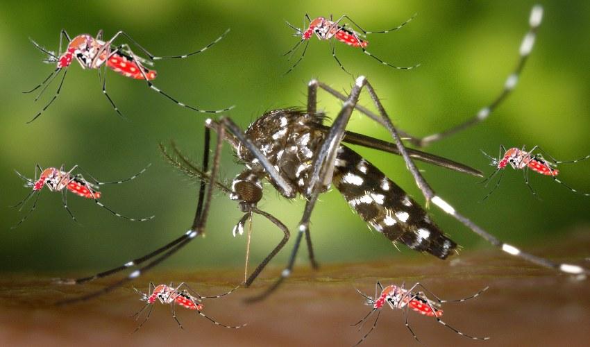 Mosquitoes : దోమలు మనుషుల రక్తాన్ని ఎందుకు తాగుతాయో తెలుసా!
