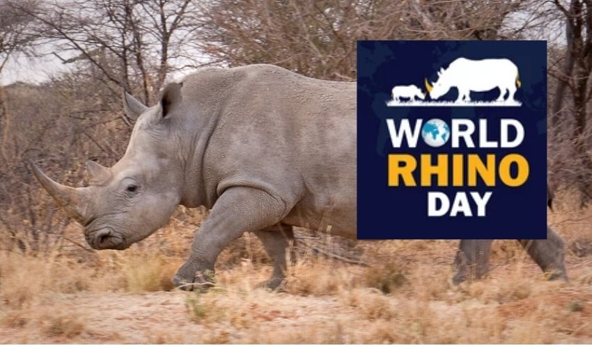 https://10tv.in/international/special-story-on-the-occasion-of-world-rhino-day-2021-279381.html