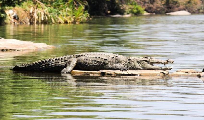 https://10tv.in/crime/crocodile-catch-and-eat-a-boy-from-river-catchment-in-karnataka-297641.html