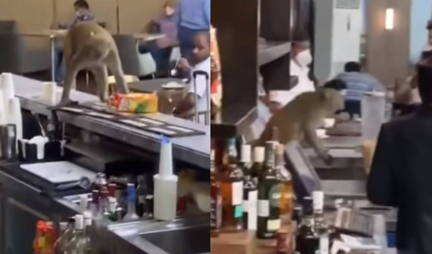 https://10tv.in/national/monkey-enters-into-the-delhi-airport-vip-lounge-285598.html