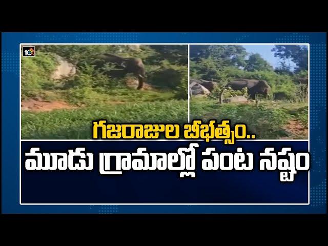 Elephants Damage Crops : గజరాజుల బీభత్సం.. మూడు గ్రామాల్లో పంట నష్టం