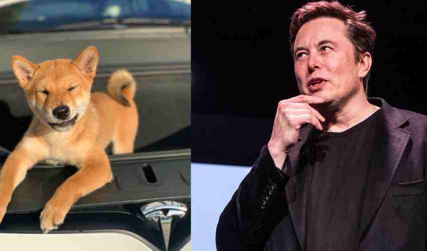 https://10tv.in/international/elon-musk-pet-dog-cripto-coin-turns-rs-1000-into-rs-34-lakh-in-just-two-months-291878.html