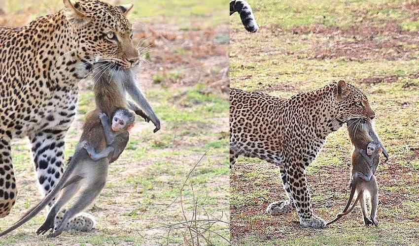 https://10tv.in/international/tragic-photos-show-a-baby-monkey-clinging-onto-the-body-of-its-dead-mother-296642.html