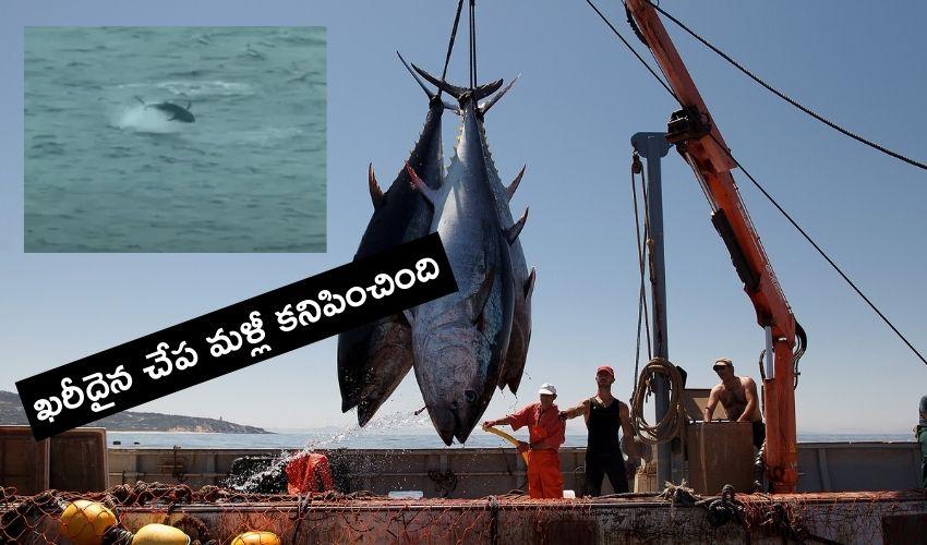 Most Expensive Fish : ప్రపంచంలోనే అత్యంత ఖరీదైన చేప..పట్టుకుని అమ్మితే జైలే..