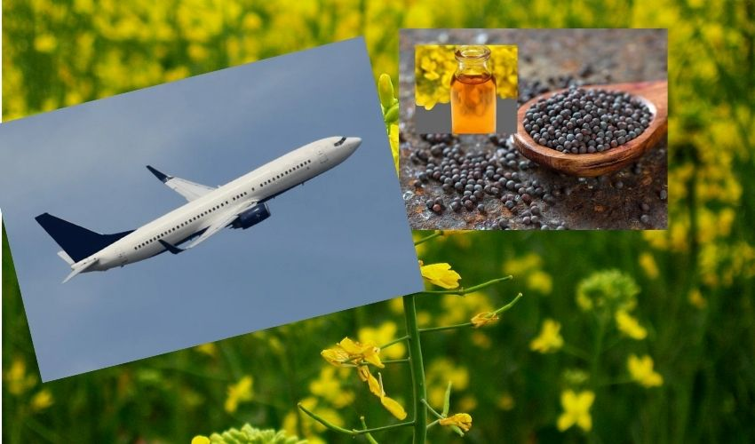 https://10tv.in/international/indian-scientist-led-teams-mustard-plant-based-jet-fuel-could-cut-emissions-by-68-study-294569.html