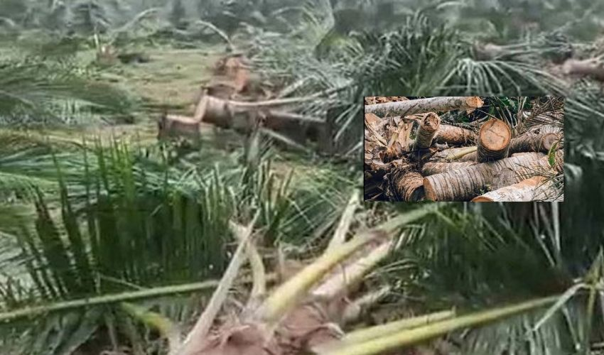 https://10tv.in/andhra-pradesh/political-clashes-in-vijayanagaram-thugs-who-cut-down-hundreds-of-coconut-trees-296901.html