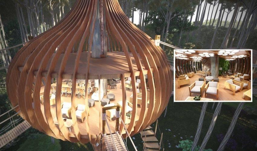 Amazing Hotel: చెట్టుపై పక్షిగూడులోనే హోటల్.. విలాసవంతమైన వింత హోటల్