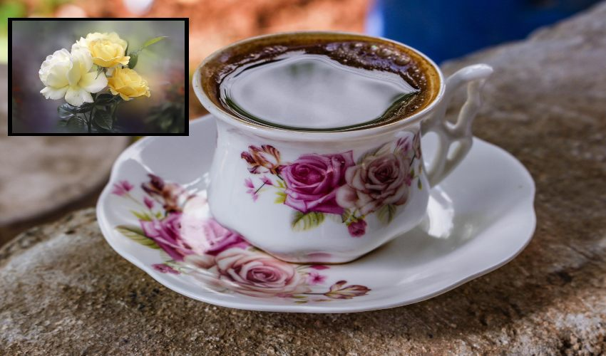 https://10tv.in/life-style/rose-tea-for-weight-loss-295290.html
