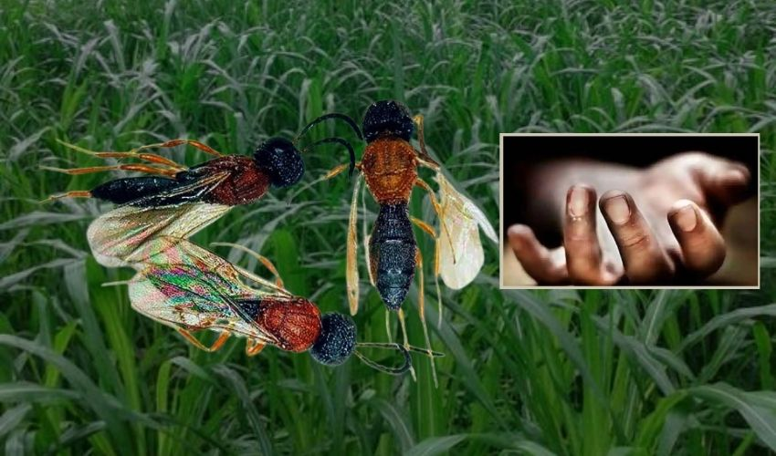 Himachal Pradesh: కందిరీగలు కుట్టి తల్లీకూతుళ్లు దుర్మరణం